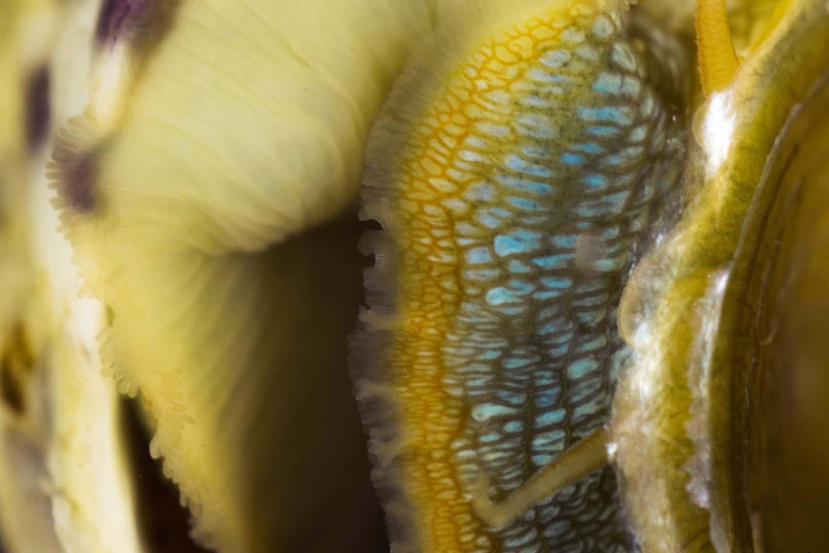 Detalle del cuerpo de un ejemplar adulto.