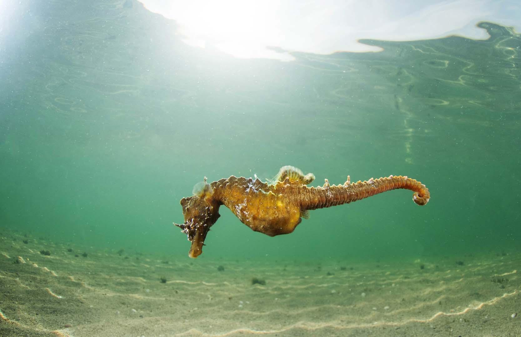 Se tiene constancia de más ejemplares avistados en el mar Menor.