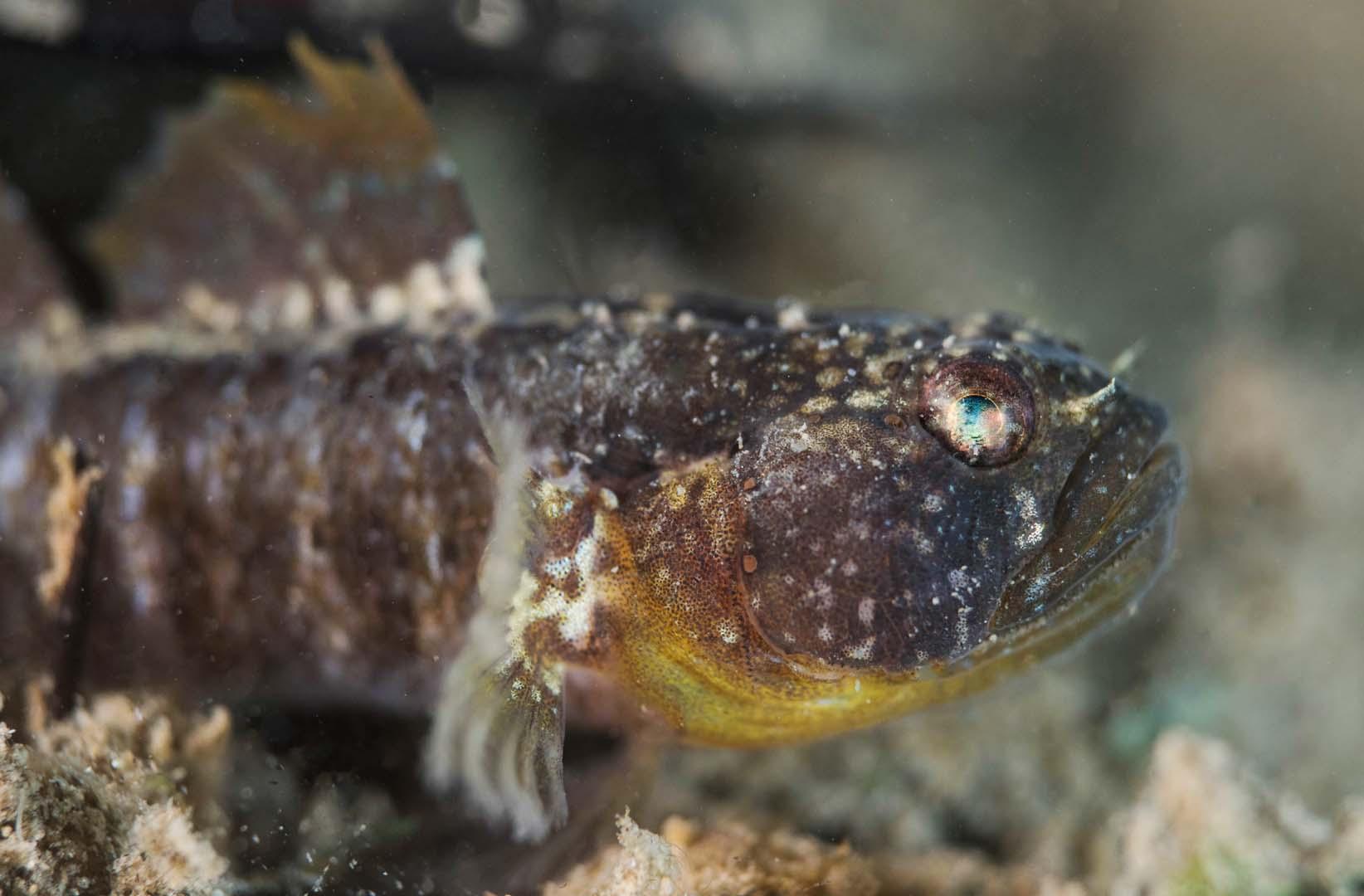 Macho adulto fotografiado bajo los balnearios.