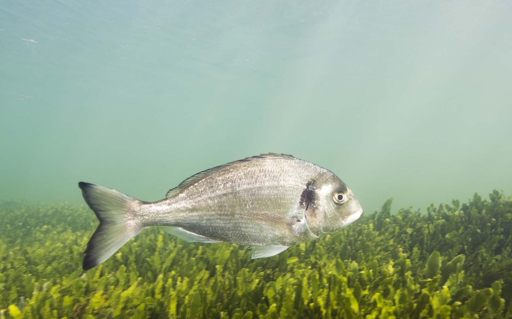 Ejemplar adulto fotografiado en Mar de Cristal.