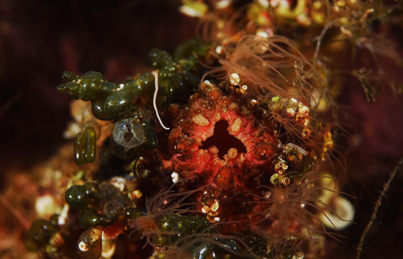 En el mar Menor se han observado muchos ejemplares.