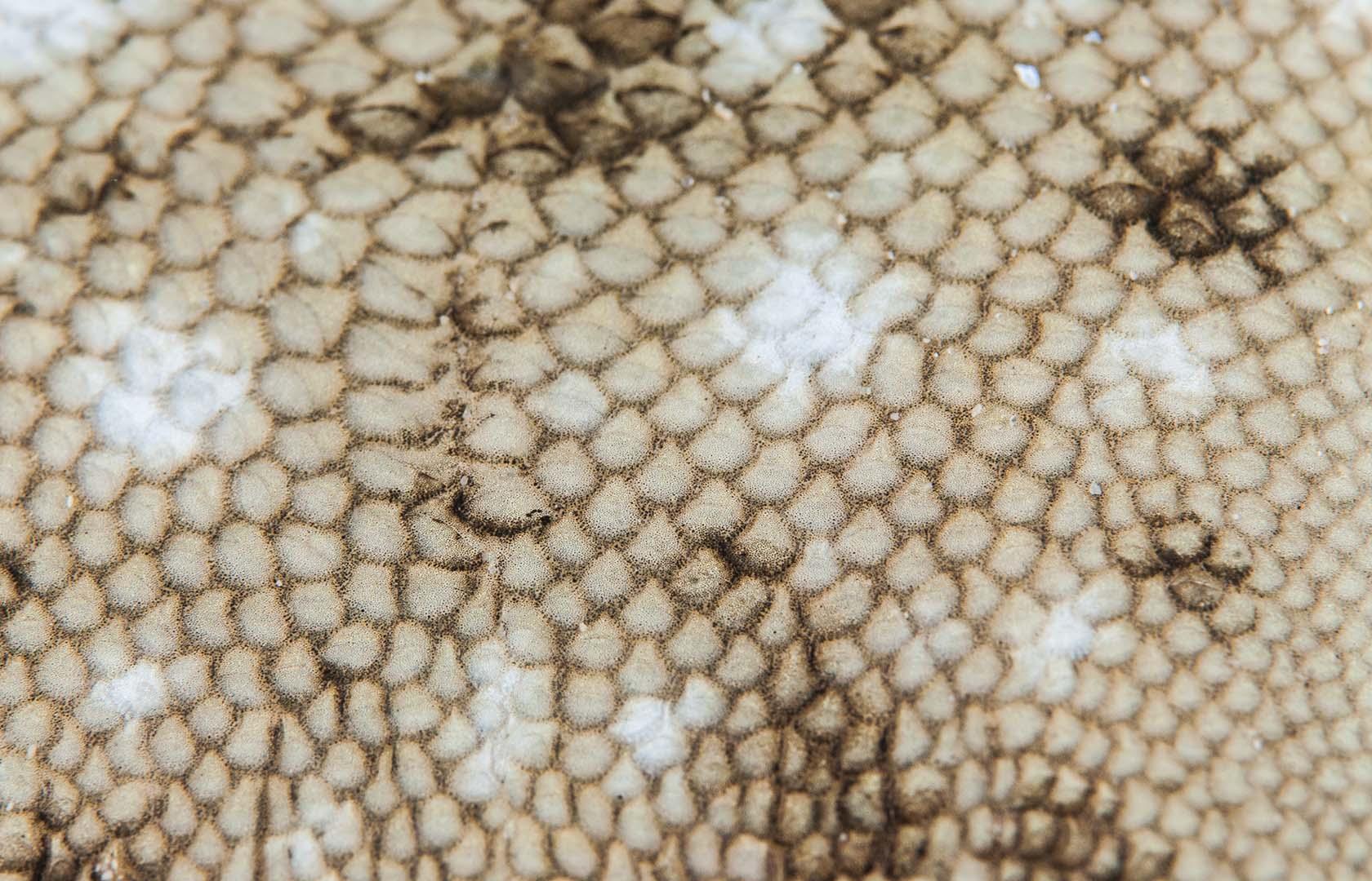 Se trata de una especie típica de arenales.