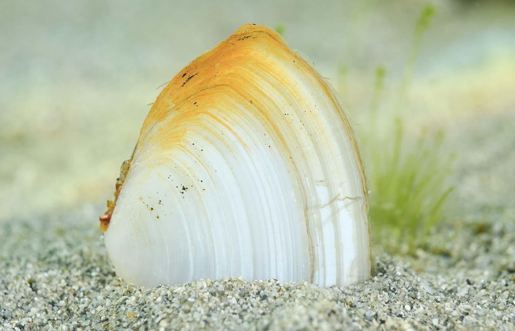 Se pueden observar varios ejemplares a poca profundidad.