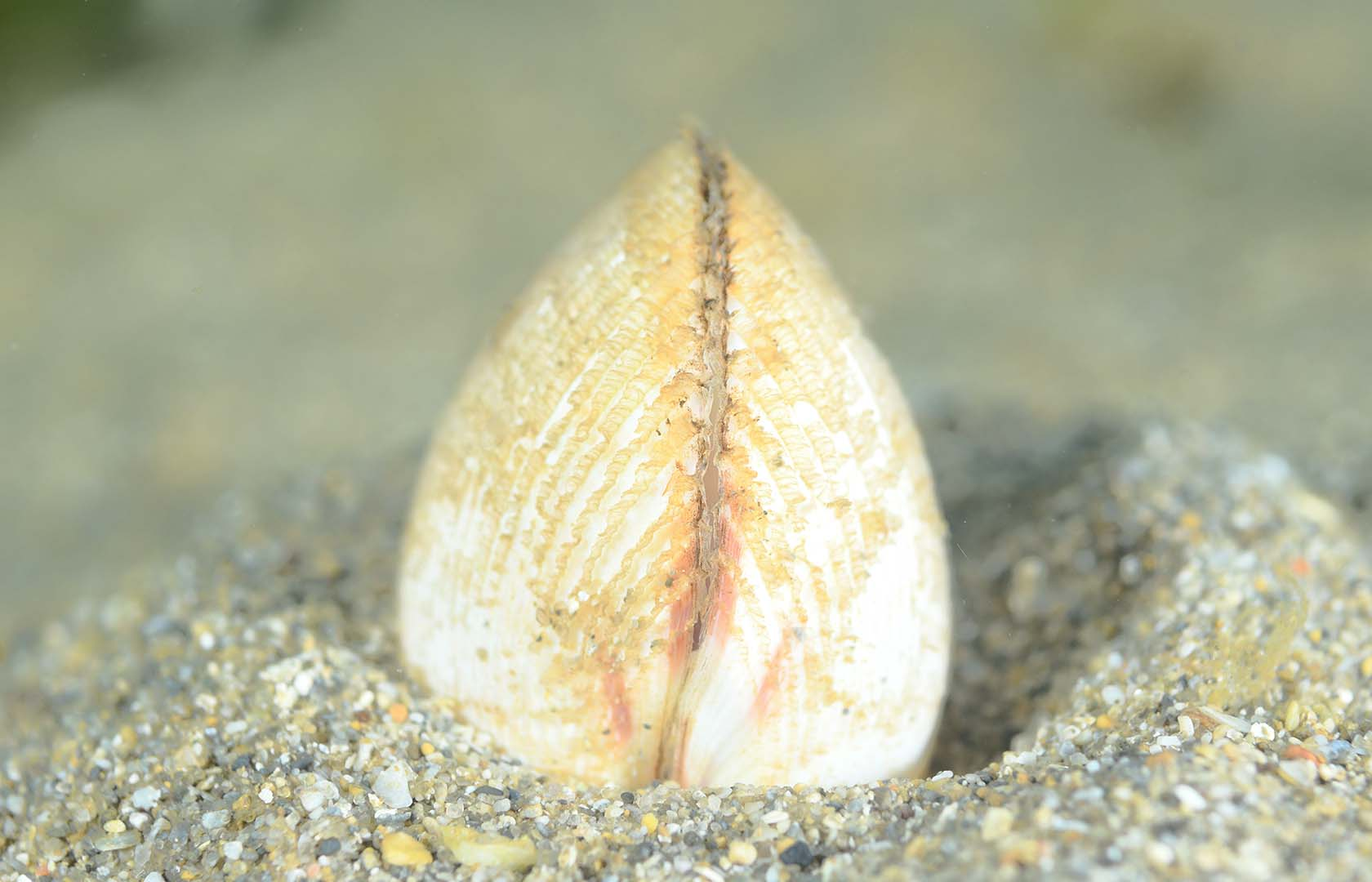 Es una especie típica de arenales.