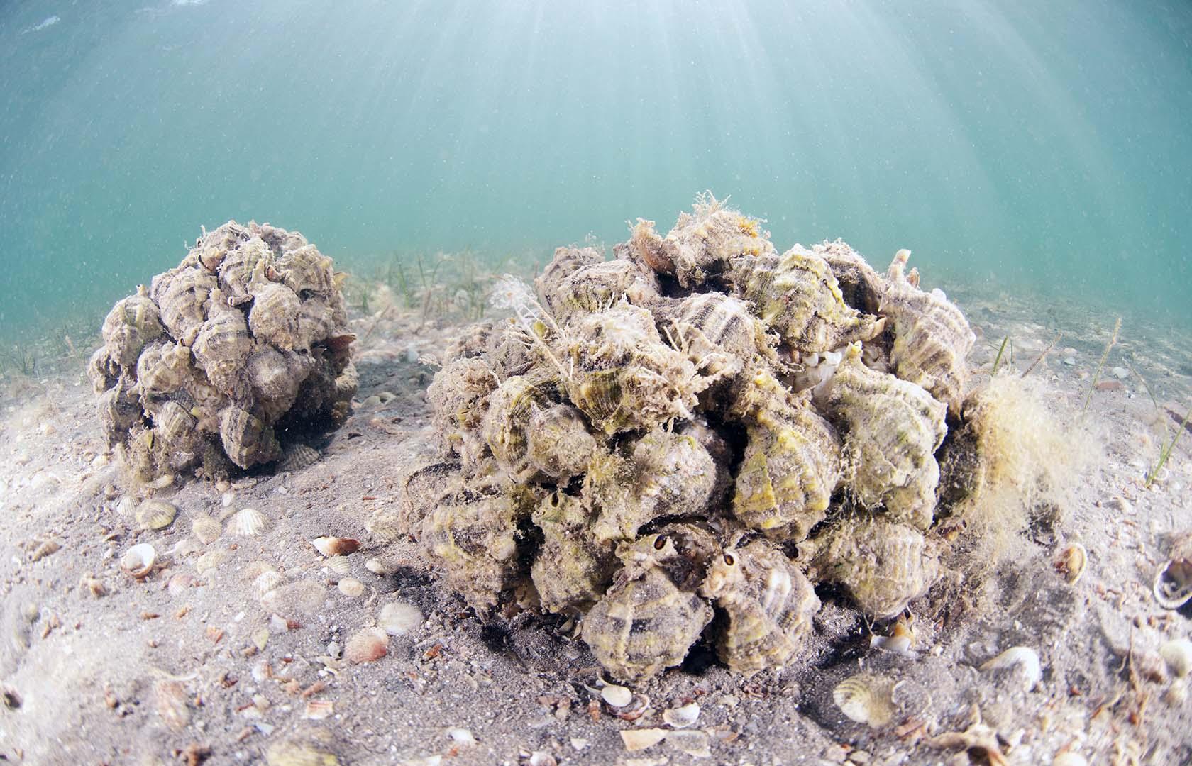 Forman grandes colonias en la época de reproducción.