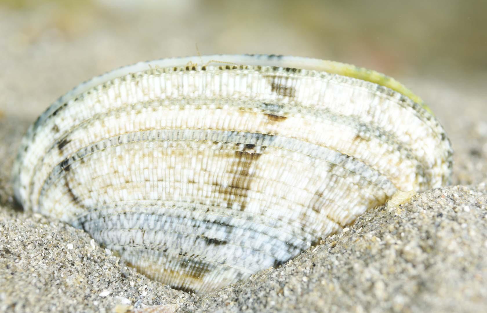 Ejemplar adulto con coloración blanquezina.