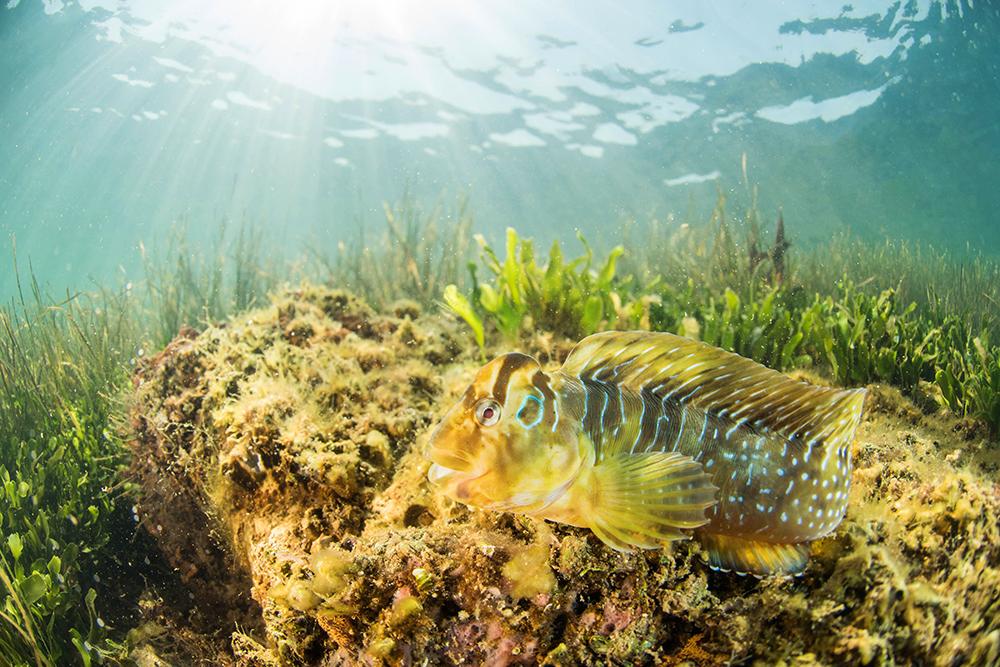 arrecifes3 peq