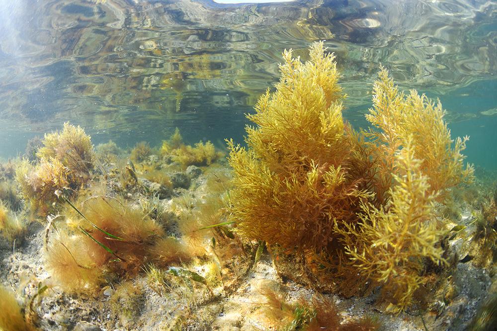 arrecifes4 peq
